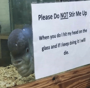 Head, Irl, and Me IRL: Please Do NOT Stir Me Up  When you do I hit my head on the  glass and if I keep doing it I ill  die. Me_irl