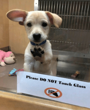 Lil rebel: Please DO NOT Touch Glass Lil rebel