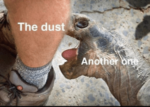 Please don't bite Mr. Turtle by OverKnight1221 MORE MEMES: Please don't bite Mr. Turtle by OverKnight1221 MORE MEMES