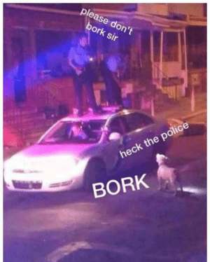 Animals, Funny, and Memes: please don't  bork sir  heck the police  BORK 42 Funny Dog Memes That'll Make Your Day! - Lovely Animals World