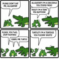 Memes, Sorry, and Alligator: PLEASE DON'T EAT  ME, ALLIGATOR!  PLEASE, YOU TWO,  STOP FIGHTING!  SORRy, MR. TURTLE  ALLIGATOR?! I'M A CROCODILE  YOU STUPID FROG!  FROG?! I'MA TOAD  YOU BUFFOON!  TURTLE?! I'M A TORTOISE  YOU FUCKIN' IDIOTS!