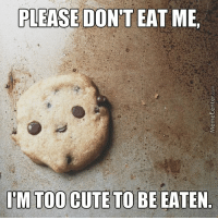 Cutest cookie ever?: PLEASE DON'T EAT ME  ITM TOO CUTE TO BE EATEN Cutest cookie ever?