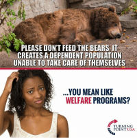 Memes, Bears, and Mean: PLEASE DONT FEED THE BEARS. IT  CREATES A DEPENDENT POPULATION  UNABLE TO TAKE CARE OF THEMSELVES  .  YOU MEAN LIKE  WELFARE PROGRAMS?  TURNING  POINT USA Hmm... 🤔🤔🤔