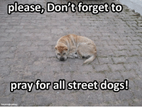 Memes, 🤖, and Hay: please, Don't forget to  pray for all street dogs!  hay me@pix bay Don't forget!
