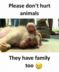 Animals, Family, and Memes: Please don't hurt  animals  They have family Follow our new page - @sadcasm.co