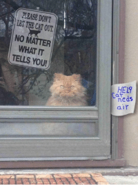 Cã§: PLEASE DONT  LET CAT THE OUT.  NO MATTER  WHAT IT  TELLS YOU!  HEL  Ca  neds  air