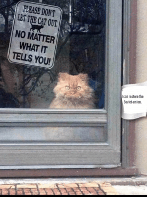 me_irl: PLEASE DON'T  LET THE CAT OUT.  NO MATTER  WHAT IT  TELLS YOU!  can restore the  Soviet-union. me_irl