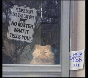 Don't fall for it!: PLEASE DON'T  LET THE CAT OUT.  NO MATTER  WHAT IT  TELLS YOU!  HEL  Caf  neds  air Don't fall for it!