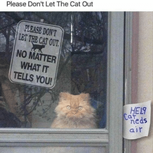 Help Cat Neds Air: Please Don't Let The Cat Out  PLEASE DON'T  LET THE CAT OUT.  NO MATTER  WHAT IT  TELLS YOU!  HEL9  Caf  neds  air Help Cat Neds Air