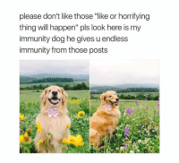 """Tumblr, Blog, and Http: please don't like those """"ike or horrifying  thing will happen"""" pls look here is my  immunity dog he gives u endless  immunity from those posts <p><a href=""""http://venusisfortransbians.tumblr.com/post/165045670139/the-goodest-boy"""" class=""""tumblr_blog"""">venusisfortransbians</a>:</p><blockquote><p>The goodest boy ✨</p></blockquote>"""