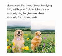 "Happenes: please don't like those ""like or horrifying  thing will happen"" pls look here is my  immunity dog he gives u endless  immunity from those posts"