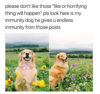 "Memes, 🤖, and Dog: please don't like those ""like or horrifying  thing will happen"" pls look here is my  immunity dog he gives u endless  immunity from those posts https://t.co/y1AZ37D4WV"