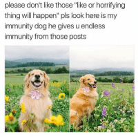 """Dog, Will, and Thing: please don't like those """"like or horrifying  thing will happen"""" pls look here is my  immunity dog he gives u endless  immunity from those posts <p>Immunity dog</p>"""