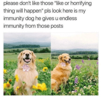 "Doggo, Dog, and Will: please don't like those ""like or horrifying  thing will happen"" pls look here is my  immunity dog he gives u endless  immunity from those posts <p>Immunity Doggo is here to fend off the hate</p>"