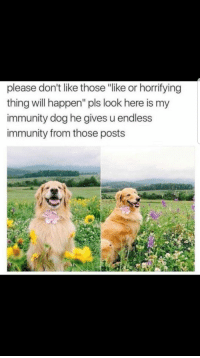 "Wholesome doggo yay: please don't like those ""like or horrifying  thing will happen"" pls look here is my  immunity dog he gives u endless  immunity from those posts Wholesome doggo yay"