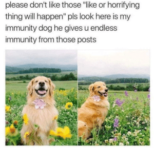 """Doggo, Dog, and Will: please don't like those """"like or horrifying  thing will happen"""" pls look here is my  immunity dog he gives u endless  immunity from those posts Immunity Doggo is here to fend off the hate"""