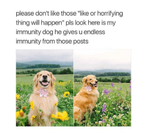 """Dog, Will, and Thing: please don't like those """"like or horrifying  thing will happen"""" pls look here is my  immunity dog he gives u endless  immunity from those posts Am goodboye , so I do u a protec :)"""