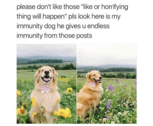 "Memes, 🤖, and Dog: please don't like those ""like or horrifying  thing will happen"" pls look here is my  immunity dog he gives u endless  immunity from those posts https://t.co/Fs50V40QO3"