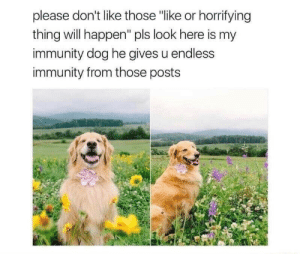 "will happen: please don't like those ""like or horrifying  thing will happen"" pls look here is my  immunity dog he gives u endless  immunity from those posts"