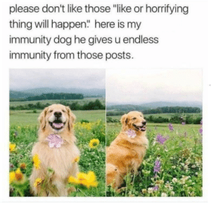 "Memes, Help, and Blues: please don't like those ""like or horrifying  thing will happen"" here is my  immunity dog he gives u endless  immunity from those posts. Something to help you get rid of the blues via /r/memes https://ift.tt/321VNjE"