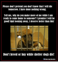 Please don't pretend you don't know that I Will die  tomorrow. I have done nothing wrong.  Tell me, Why do you make more of me While I am  ready to come home to someone? I promise I Will be  good! Quit looking away, I deserve better than this!  Don't breed or buy while shelter dogs die!  I Hale dog Breeders Nikki #LoveThyBully