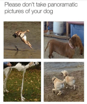 Pictures, Dog, and For: Please don't take panoramatic  pictures of your dog Speaks for itself