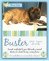 Beautiful, Cats, and Children: Please Help  Buster  51675 8 years  old, 50 bs  Scared, neglected 8 year old needs a second  ance in a kind, loving, caring home  ch  レ19 at manhattanace in needoba, chance,  ill **** RESERVED.....PLEASE CONSIDER ANOTHER DOG IN NEED ****  **** TO BE KILLED - 1/8/2019 ****  8 YEAR OLD IN NEED - PLEASE HELP BUSTER :( Not even the most deplorable of conditions can take away from the masterpiece that is Buster. Yet here he is, with a broken heart, suffering from unforgivable neglect. Gorgeous boy of 8 years is in urgent need of medical care. He is understandably grumpy from distress of his condition. Who could have the heart to watch a beautiful life languish and suffer? More importantly, we are hoping for a heart full of compassion to see his worth,and promise to restore him to the ribbon worthy champion he was meant to be. His memorable face leaves an impression on the heart that is indisputable. The inexcusable condition he was surrendered in explains his trepidation of strangers in the dismal shelter. Buster deserves a chance to know care, kindness and experience humanity. If you can make this promise to him, be it fostering or adopting, please message this page.  BUSTER@MANHATTAN ACC Hello, my name is Buster My animal id is #51675 I am a male brown brindle dog at the  Manhattan Animal Care Center The shelter thinks I am about 8 years old, 50 lbs Came into shelter as a stray Jan. 2, 2019 Buster is rescue only  Buster is at risk, new hope only, for behavioral reasons. Buster has not acclimated well to the care center and has shown shown distance increasing behaviors such as growling and snapping. Buster has allowed for only minimal handling and would be best suited for a new hope partner that can offer behavior modification in a low stress environment. Medically, Buster has a skin condition as well as a condition of the ear which may require follow up vet and long term care.  My medical notes are... Weight: 50 lbs Vet Notes 2/01/2019 [DVM Intake] DVM Intake Exam Estimated age: 10y Microchip noted on Intake? no Microchip Number (If Applicable): History : owner surrender Subjective: BARH, good defecation Observed Behavior - will hard bark and try to bite at any contact or reaching forward, had to be sedated for exam Evidence of Cruelty seen - no Evidence of Trauma seen - no Objective P = wnl R = wnl BCS 3/9 EENT: Eyes clear, ears AU stenotic with purulent discharge, no nasal discharge noted Oral Exam: only mand incisors and L canine visible PLN: No enlargements noted H/L: NSR, NMA, CRT < 2, Lungs clear, eupnic ABD: Non painful, no masses palpated U/G: male intact 2 testicles soft symmetric, no leakage or discharge MSI: Ambulatory x 4, skin free of parasites, no masses noted, alopecia on medial aspect of all 4 limbs, inflammationa nd discharge noted from interdigital webbing, overgrown nails CNS: Mentation appropriate - no signs of neurologic abnormalities Rectal: visually normal, digital rectal unremarkable  Assessment: underweight dermatitis chronic otitis alopecia Prognosis: good Plan: sedated exam simplicef 5mg/kg po SID for 14d Recommend medicated washing 2/week ear cleaning claro once SURGERY: Perm waiver - age  1619 2/01/2019  [Spay/Neuter Waiver - Age]  It is the policy of ACC not to perform surgery on any animal over the age of 8-10 years due to the higher risks incurred in a shelter setting. The veterinarian is hereby issuing a permanent spay/neuter waiver, from the spay/neuter requirements of the City of NY due to the estimated age of this animal. ACC does recommend you consult with your veterinarian to determine if surgical sterilization is appropriate.  Details on my behavior are... Behavior Condition: 5. Red  Behavior History Behavior Assessment Buster was not handled by a counselor but he was snapping barking and attempting to bite at a ART team member. He was not tolerant of being picked up. Allowed minimal handling.  Date of Intake: 1/2/2019  Spay/Neuter Status: Unknown  Basic Information:: Buster is an 8 year old male brown brindle medium mixed breed dog. Previous owner had buster his whole life and he was surrendered by a family friend due to personal concerns.  Previously lived with:: 2 adults, 1 child How is this dog around strangers?: Buster is shy around strangers How is this dog around children?: Buster has been around a small child. He has growled and lunged at this child. How is this dog around other dogs?: unknown How is this dog around cats?: unknown Resource guarding:: Buster will growl if his food bowl toys or treats are touched while he is using the. Bite history:: Buster has not bitten another animal or person Housetrained:: Partially Energy level/descriptors:: Medium energy Other Notes:: unknown Has this dog ever had any medical issues?: Yes Medical Notes: Buster came into ACC with an ear infection and overgrown nails. He also had discharge coming from his eye. For a New Family to Know: unknown  Date of intake:: 1/2/2019 Spay/Neuter status:: No Means of surrender (length of time in previous home):: Owner Surrender (In home for 8 years) Previously lived with:: Adults and a small child Behavior toward strangers:: Shy Behavior toward children:: Growled at lunge at the small child he was around Resource guarding:: Yes, Buster will growl if his food bowl, toys, or treats are touched while he is using them. Bite history:: None reported Housetrained:: Partially Energy level/descriptors:: Buster is described as having a medium level of activity. Other Notes:: Buster will snap when attempts are made to groom him.  Summary:: When attempts are made to remove Buster from his kennel, he snaps and does not allowed handling. For this reason, a handling assessment was unable to be preformed. Please see his owner surrender profile for a full report of hid behavior in his previous home.  Date of intake:: 1/2/2019  Summary:: Barking, snapping, allowed minimal handling  Date of initial:: 1/2/2019  Summary:: Hard barks, snaps, sedated for exam  ENERGY LEVEL:: Buster is described as having a medium level of activity.  BEHAVIOR DETERMINATION:: New Hope Only Behavior Asilomar: TM - Treatable-Manageable Recommendations:: No children (under 13),Place with a New Hope partner Recommendations comments:: No children: Due to Buster being reported to growl and snap at the small child in the home, as well as the behavior he has displayed at the care center, we recommend an adult only home. Place with a New Hope partner: Buster has not acclimated well to the kennel environment and has allowed only minimal handling since intake. We recommend placement with a New Hope partner who can provide any necessary behavior modification (force-free, positive reinforcement-based) and re-evaluate behavior in a stable home environment before placement into a permanent home. Potential challenges: : Handling/touch sensitivity,Fearful/potential for defensive aggression  BUSTER IS RESCUE ONLY…..TO SAVE THIS PUP YOU MUST FILL OUT APPLICATIONS WITH AT LEAST 3 NEW HOPE RESCUES. PLEASE HURRY!!!   IF YOU CAN FOSTER OR ADOPT THIS PUP, PLEASE PM OUR PAGE FOR ASSISTANCE. WE CAN PROVIDE YOU WITH LINKS TO APPLICATIONS WITH NEW HOPE RESCUES WHO ARE CURRENTLY PULLING FROM THE NYC ACC.  PLEASE SHARE THIS DOG FOR A HOME TO SAVE HIS LIFE.