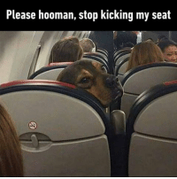 9gag, Memes, and United: Please hooman, stop kicking my seat If I wanted a ruff ride, I'd have flown with United. Follow @9gag