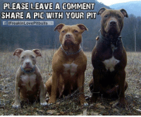 PLEASE LEAVE A COMMENT  SHARE A PIC WITH YOUR PIT  f IFreakinLovePitbulls Show us your pits!
