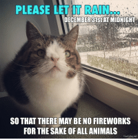 Take care of your furry friends 💜: PLEASE LET IT RAIN  DECEMBER 31st AT MIDNIGHT  SO THAT THERE MAY BE NO FIREWORKS  FOR THE SAKE OF ALL ANIMALS  Monty Boy net Take care of your furry friends 💜