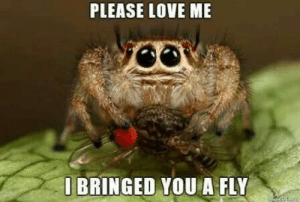 PLEASE LOVE ME: PLEASE LOVE ME  O BRINGED YOU A FLY  de PLEASE LOVE ME