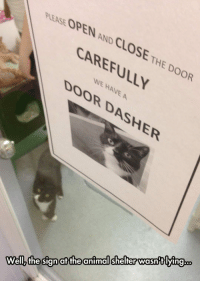 epicjohndoe:  One Of These Days, Darn Humans: PLEASE OPEN AND CLOSE THE DOOR  CAREFULLY  WE HAVE A  DOOR DASHER  animal shelter wasntlying..  at the  Wellz the sign epicjohndoe:  One Of These Days, Darn Humans