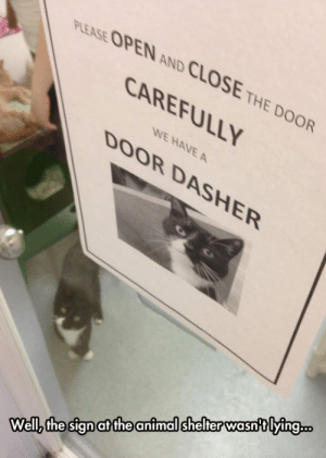 epicjohndoe:  One Of These Days, Darn Humans: PLEASE OPEN AND CLOSE THE DOOR  CAREFULLY  WE HAVE A  DOOR DASHER  Wellz the sign at the animal shelter wasntlying.. epicjohndoe:  One Of These Days, Darn Humans