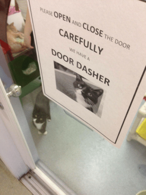 thingsididntknowwereerotic:  Asshole cats sitting right next to signs about how they're an asshole is one of my favorite things.: PLEASE OPEN AND CLOSE THE DOOR  CAREFULLY  WE HAVE A  DOOR DASHER thingsididntknowwereerotic:  Asshole cats sitting right next to signs about how they're an asshole is one of my favorite things.