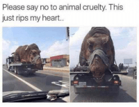 Animal, Heart, and Animal Cruelty: Please say no to animal cruelty. This  just rips my heart. Poor T. rex