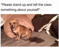 """Funny, Lol, and Class: """"Please stand up and tell the class  something about yourself"""" Lol"""