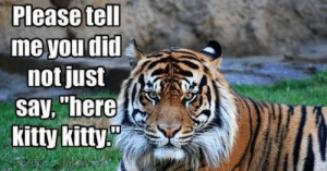"Tiger, Tigers, and World: Please tell  me you did  not just  say, ""here  kitty kitty Tigers are on the brink of extinction and International World Tiger Day aims to bring attention to this fact and try to halt their decline.#tigers #tigermemes #animaLMEMES #Tigerinternationalday #funnytigers #bigcats #bigcatsmemes"