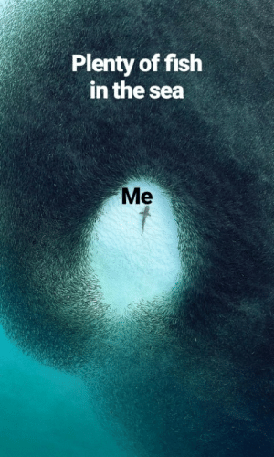 Invest in this meme to be on top of the food chain via /r/MemeEconomy https://ift.tt/2YSirxd: Plenty of fish  in the sea  Me Invest in this meme to be on top of the food chain via /r/MemeEconomy https://ift.tt/2YSirxd