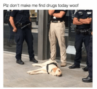 Drugs, Memes, and Today: Plz don't make me find drugs today woof