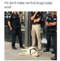 Drugs, Memes, and Butterfly: Plz don't make me find drugs today  woof Follow my other accounts @antisocialtv @lola_the_ladypug @x__antisocial_butterfly__x ❤️