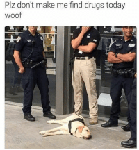 Drugs, Funny, and Meme: Plz don't make me find drugs today  woof @memezar may be the greatest meme page in the world!