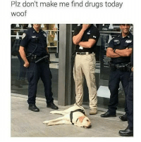 Drugs, Funny, and Ted: Plz don't make me find drugs today  woof Woof (@hilarious.ted)