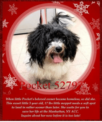 Andrew Bogut, Animals, and Desperate: Po  cket 5279  When little Pocket's beloved owner became homeless, so did she.  This sweet little 3 year old, 17 Ibs little moppet needs a soft spot  to land in rather sooner than later. She waits for you to  save her life at the Manhattan, NY ACC.  Inquire about her now before it is too late! **FOSTER or ADOPTER NEEDED ASAP**  When little Pocket's beloved owner became homeless, so did she. This sweet little 3 year old, 17 lbs little moppet needs a soft spot to land in rather sooner than later. She waits for you to save her life at the Manhattan, NY ACC. Inquire about her now before it is too late!  ✔Pledge✔Tag✔Share✔FOSTER✔ADOPT✔Save a life!  Pocket 52797 Small Mixed Breed Sex female Age 3 yrs (approx.) - 17 lbs My health has been checked.  My vaccinations are up to date. My worming is up to date.  I have been micro-chipped.  I am waiting for you at the Manhattan, NY ACC. Please, Please, Please, save me!  ****************************************** To FOSTER or ADOPT,  SPEAK UP NOW & Save a Life:  Direct Adopt from the ACC Or Apply with rescues Or Message Must Love Dogs - Saving NYC Dogs for assistance ASAP!!! ******************************************  The general rule is to foster you have to be within 4 hours of the NYC ACC approved New Hope partner rescues you are applying with and to adopt you will have to be in the general NE US area; NY, NJ, CT, PA, DC, MD, DE, NH, RI, MA, VT & ME (some rescues will transport to VA) UNLESS you can get to the shelter IN PERSON.  ****************************************** ... NOTE: *** WE HAVE NO OTHER INFORMATION THAN WHAT IS LISTED WITH THIS FLYER *** - For more information or to adopt, please EMAIL adopt@nycacc.org  - SUBJECT Line: ** Dogs Name & ID# **  - Don't forget to add your email address and phone numbers where they can reach you to your email as well. .... RE: ACC site Just because a dog is not on the ACC site does not mean they are safe by any means. There are many reasons for t