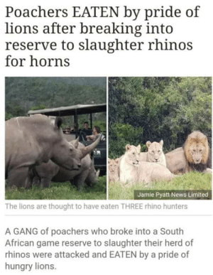 Hungry, News, and Omg: Poachers EATEN by pride of  lions after breaking into  reserve to slaughter rhinos  for horns  Jamie Pyatt News Limited  The lions are thought to have eaten THREE rhino hunters  A GANG of poachers who broke into a South  African game reserve to slaughter their herd of  rhinos were attacked and EATEN by a pride of  hungry lions omg-humor:  When karma strikes back