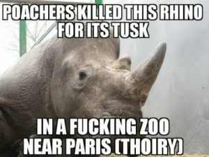(Absolutely) Barbaric bastards: POACHERSKILLEDTHIS RHINO  FOR ITS TUSK  IN A FUCKING Z00  NEAR PARIS CTHOIRY! (Absolutely) Barbaric bastards