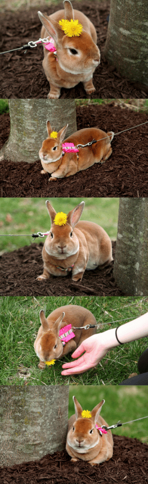 Tumblr, Blog, and Http: poethebunny:Poe ft dandelions! He had a great time outside today