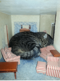 pointlesslypointing:  204: eversongwoods: Wtf how is he so big he just has a really healthy diet   It's all the love from his human companion. Did you never read Clifford, you uncultured heathen?: pointlesslypointing:  204: eversongwoods: Wtf how is he so big he just has a really healthy diet   It's all the love from his human companion. Did you never read Clifford, you uncultured heathen?