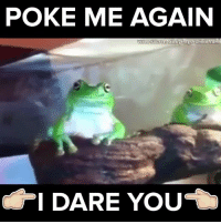 Memes, 🤖, and Poke: POKE ME AGAIN  Video Source sticky frogs tumblr com  I DARE YOU Come at me bro #onedip