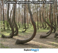 No one knows why or how all the trees formed like that. How creepy...: Polands Mysterious crooked Forrest  Talent  Explore No one knows why or how all the trees formed like that. How creepy...