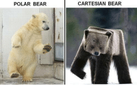 POLAR BEAR  CARTESIAN BEAR Math joke :v